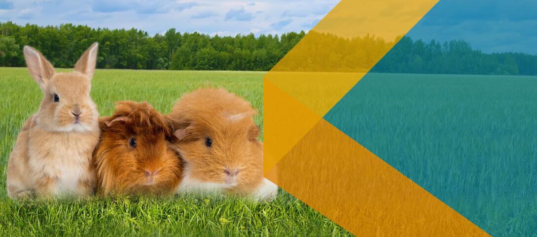 Línea Cpharma al cuidado de la Salud Animal!